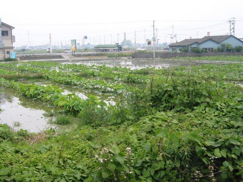 Fields in Tokushima-ken